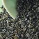 Gunpowder Vert-Tiges Formose