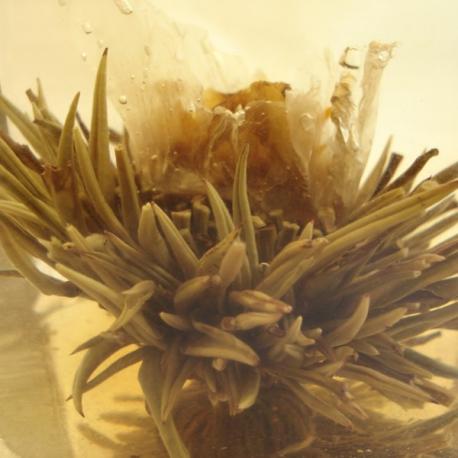 Fleur de thé Pavillon de printemps