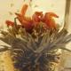 Fleur de thé Douceur d'Osmanthus